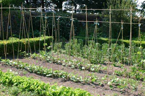 Secluded walled garden where the vegetables for dinner are home-grown.