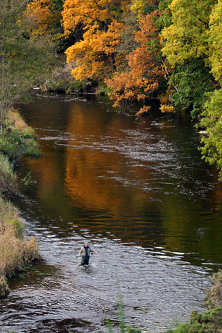 Fly Fishing on the River Tweed near Neidpath Castle